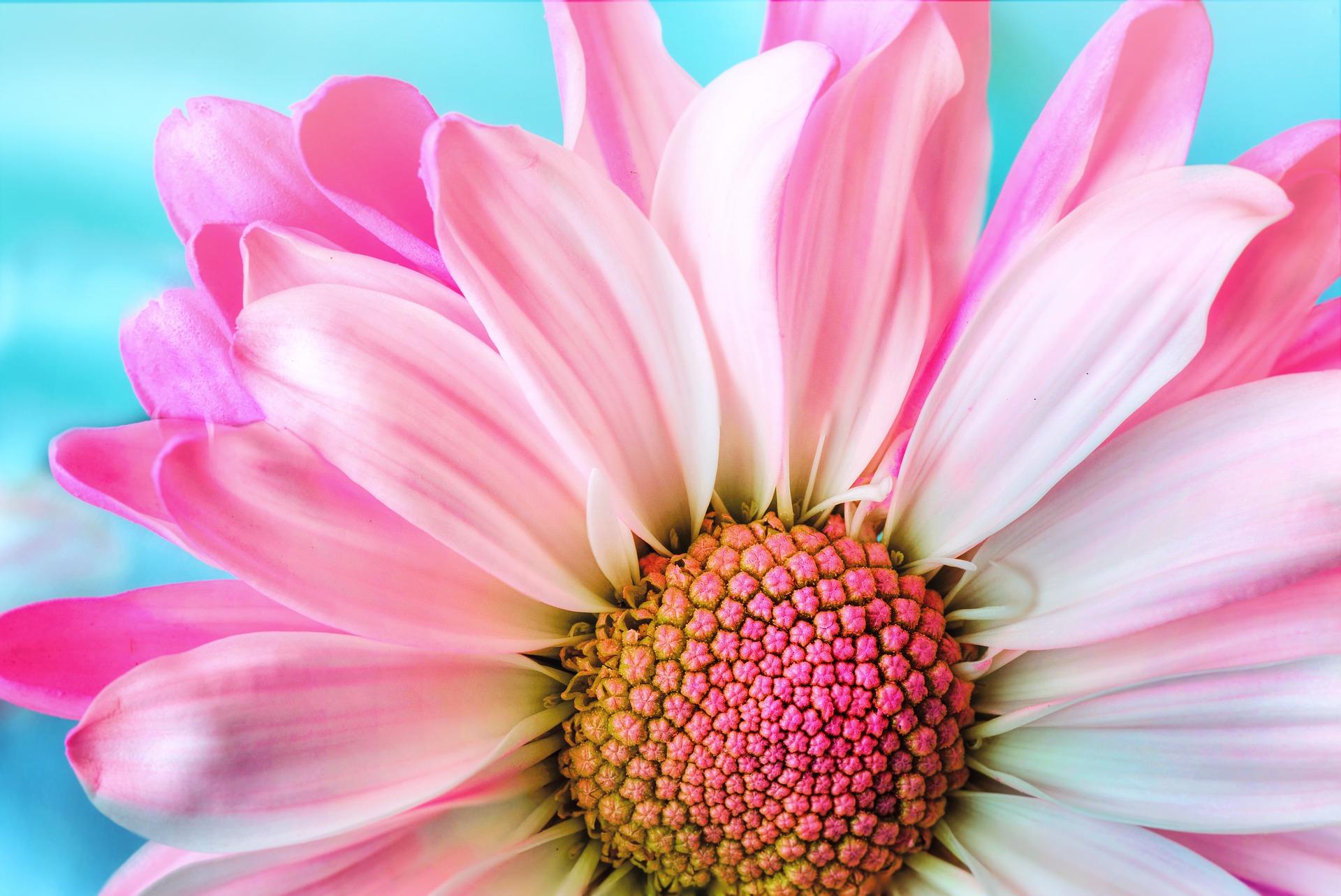colori nella comunicazione - rosa